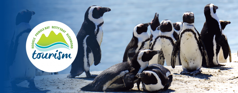 Kapensis-African-Penguins-BettysBay