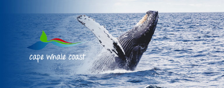 Kapensis-activities-Whale-tours